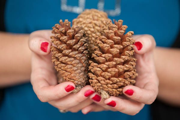pine cones in a lady's hand